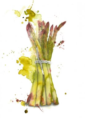 Tasty asparagus illustrated in watercolour and pancil
