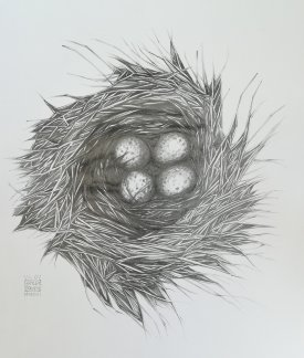Pencil drawing. Birds Nest with Eggs.
